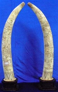 "Picture of 40"" Pair of Antique Bone Tusks - Monk and Tiger (F40-monk)"
